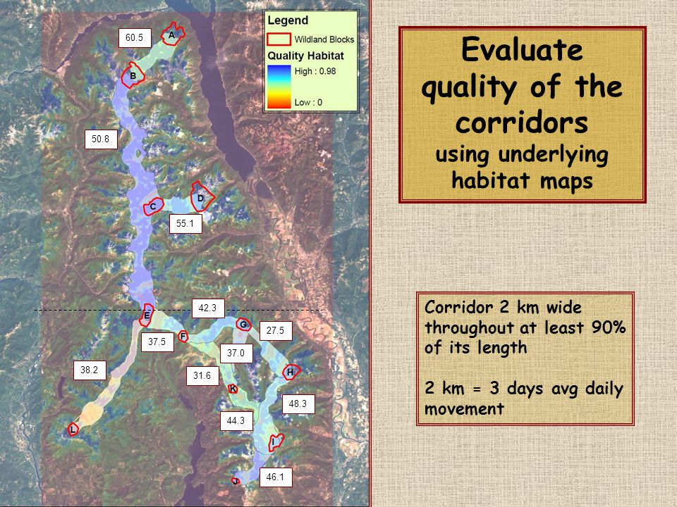 60.5 46.1 55.1 37.5 38.2 48.3 50.8 44.3 31.6 27.5 37.0 Evaluate quality of the corridors using underlying habitat maps Corridor 2 km wide throughout a
