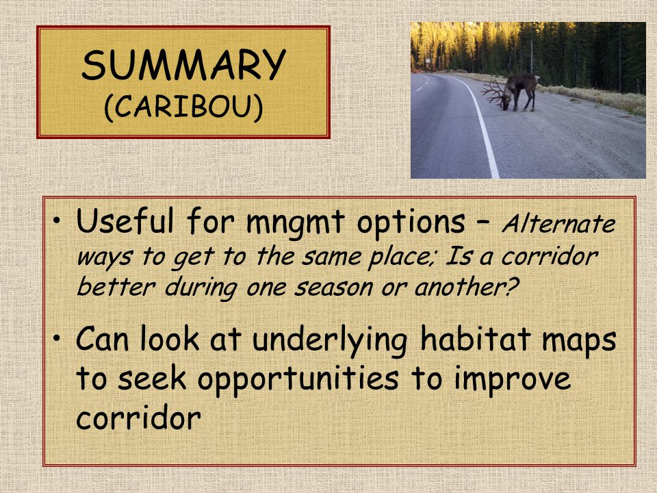 SUMMARY (CARIBOU) Useful for mngmt options – Alternate ways to get to the same place; Is a corridor better during one season or another.