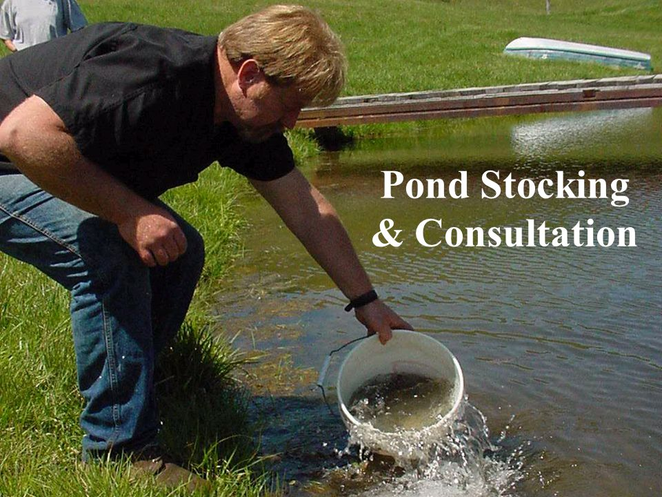 Pond Stocking & Consultation