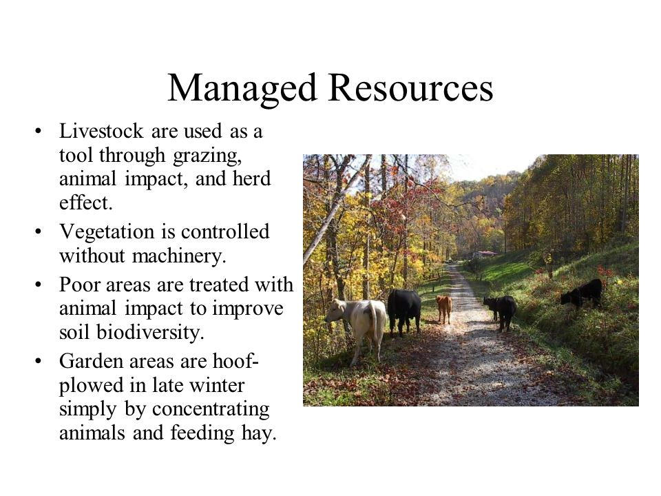 Managed Resources Livestock are used as a tool through grazing, animal impact, and herd effect.