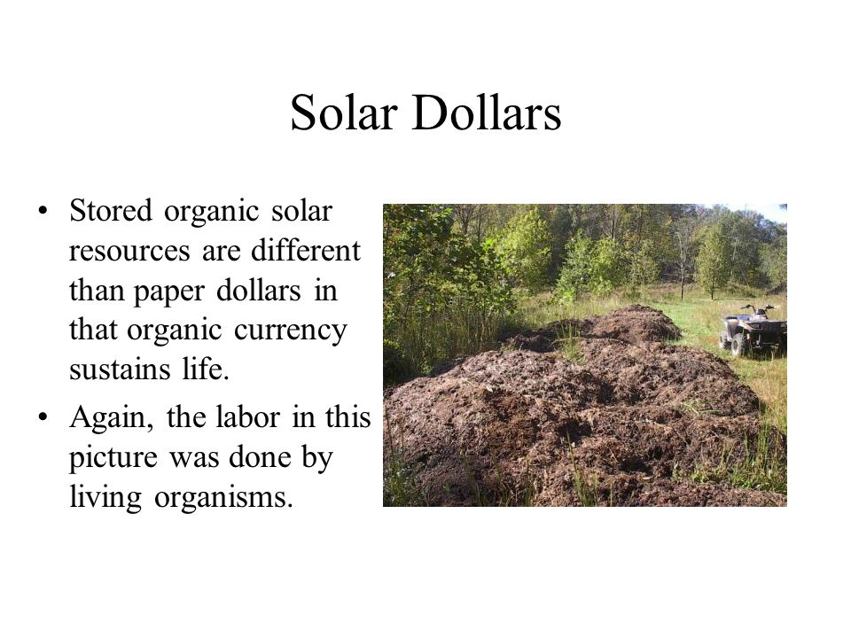 Solar Dollars Stored organic solar resources are different than paper dollars in that organic currency sustains life.