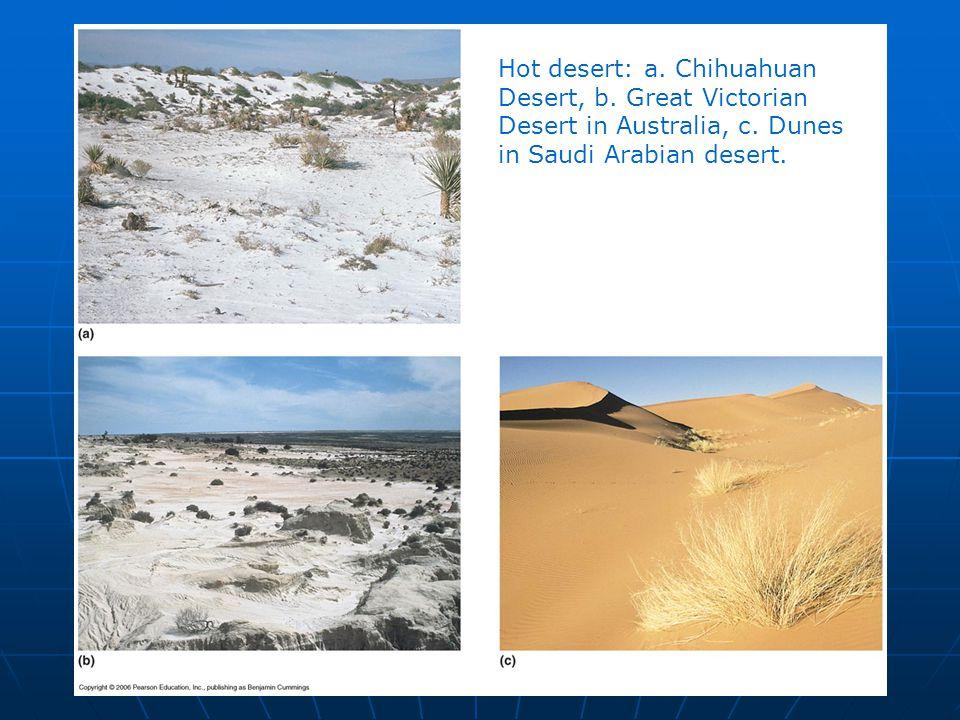 Hot desert: a. Chihuahuan Desert, b. Great Victorian Desert in Australia, c. Dunes in Saudi Arabian desert.