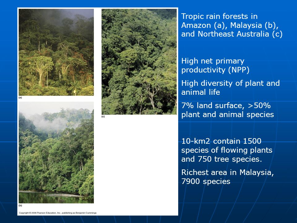 Tropic rain forests in Amazon (a), Malaysia (b), and Northeast Australia (c) High net primary productivity (NPP) High diversity of plant and animal li