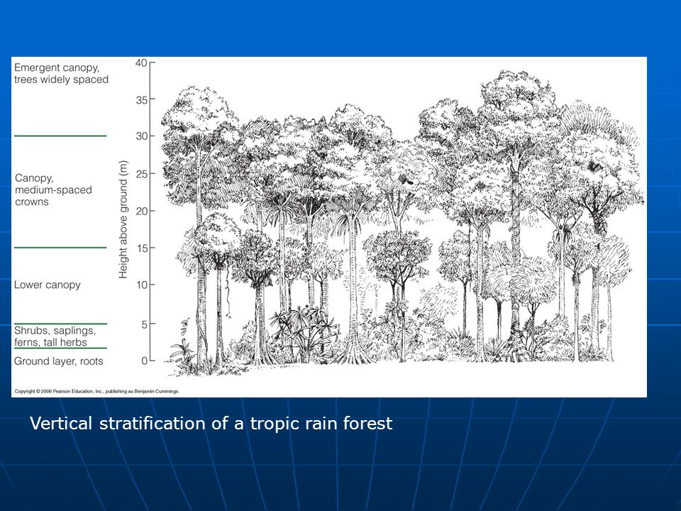 Vertical stratification of a tropic rain forest