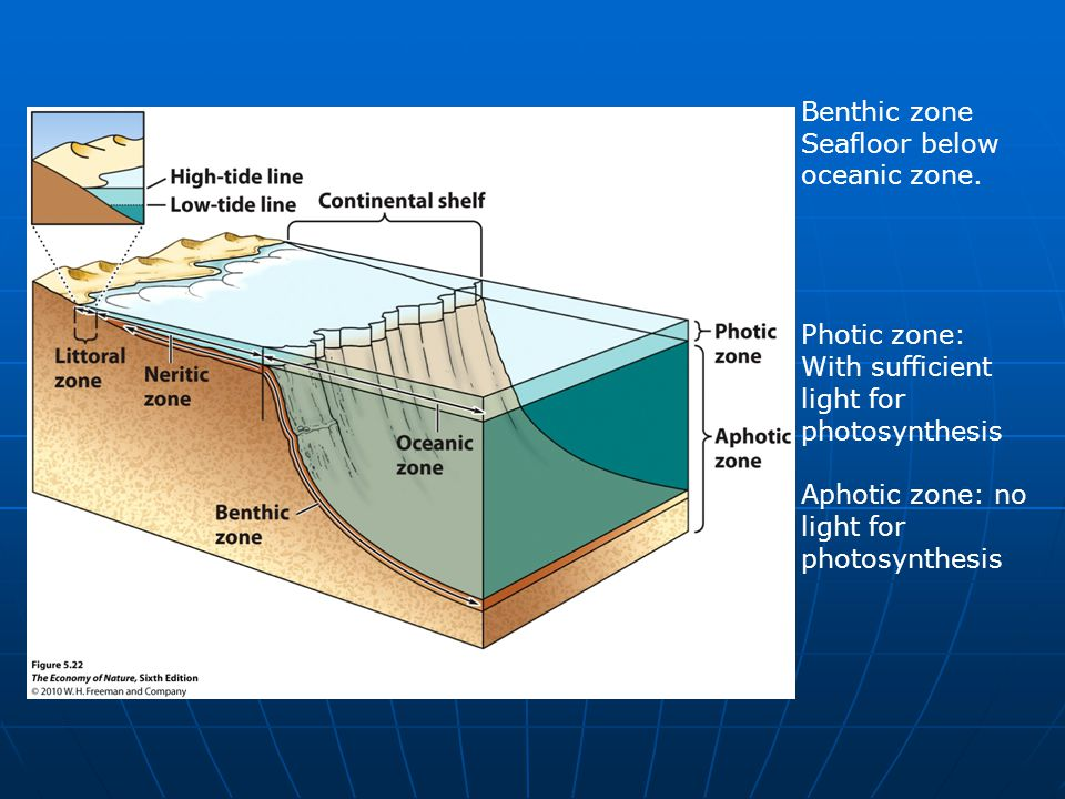 Benthic zone Seafloor below oceanic zone. Photic zone: With sufficient light for photosynthesis Aphotic zone: no light for photosynthesis