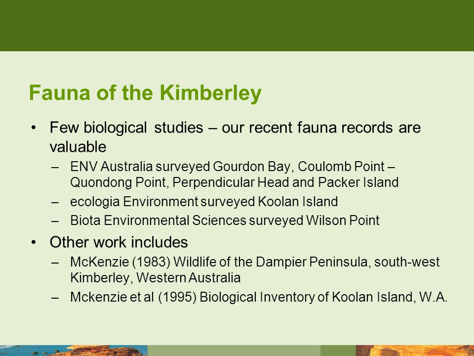 Fauna of the Kimberley Few biological studies – our recent fauna records are valuable –ENV Australia surveyed Gourdon Bay, Coulomb Point – Quondong Point, Perpendicular Head and Packer Island –ecologia Environment surveyed Koolan Island –Biota Environmental Sciences surveyed Wilson Point Other work includes –McKenzie (1983) Wildlife of the Dampier Peninsula, south-west Kimberley, Western Australia –Mckenzie et al (1995) Biological Inventory of Koolan Island, W.A.