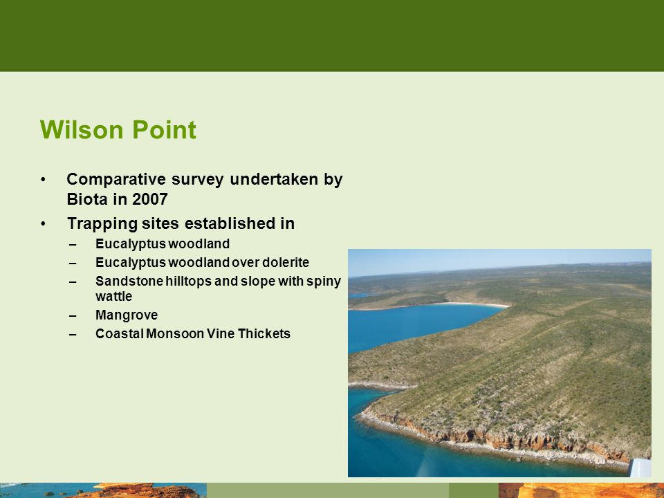 Wilson Point Comparative survey undertaken by Biota in 2007 Trapping sites established in –Eucalyptus woodland –Eucalyptus woodland over dolerite –Sandstone hilltops and slope with spiny wattle –Mangrove –Coastal Monsoon Vine Thickets