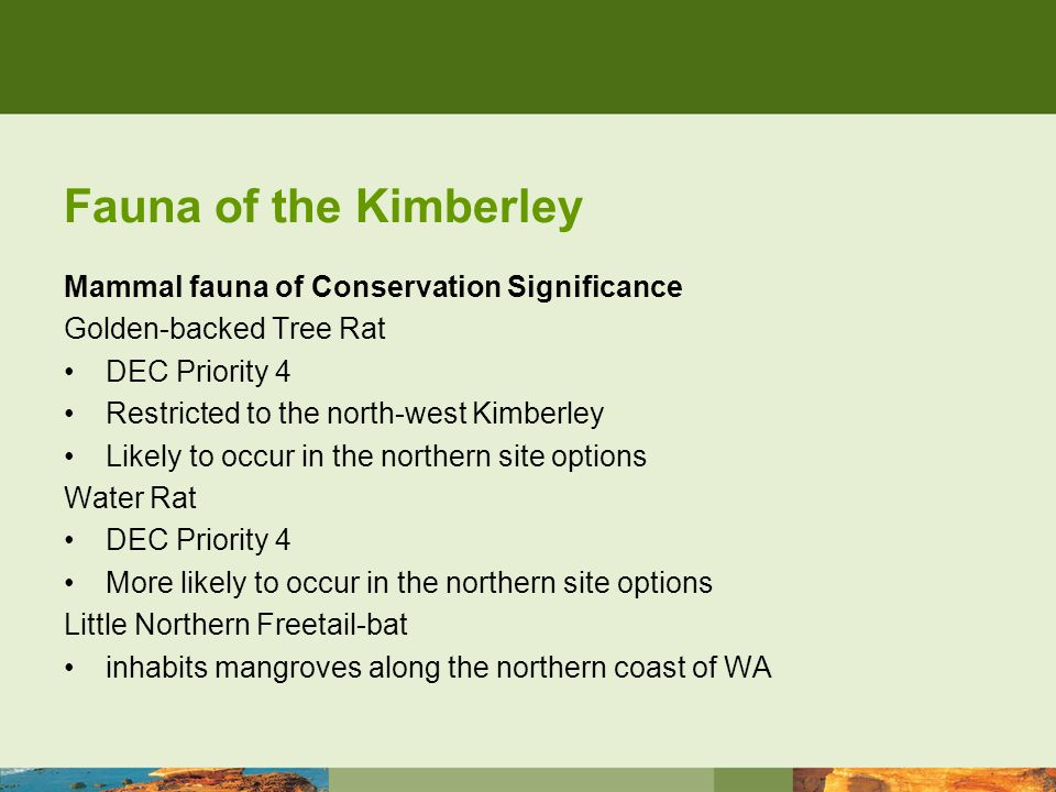 Fauna of the Kimberley Mammal fauna of Conservation Significance Spectacled Hare-wallaby extremely rare in WA - reduced to a few isolated populations in the Pilbara and the Kimberley Scaly-tailed Possum DEC Priority 4 Known to occur at the northern site options