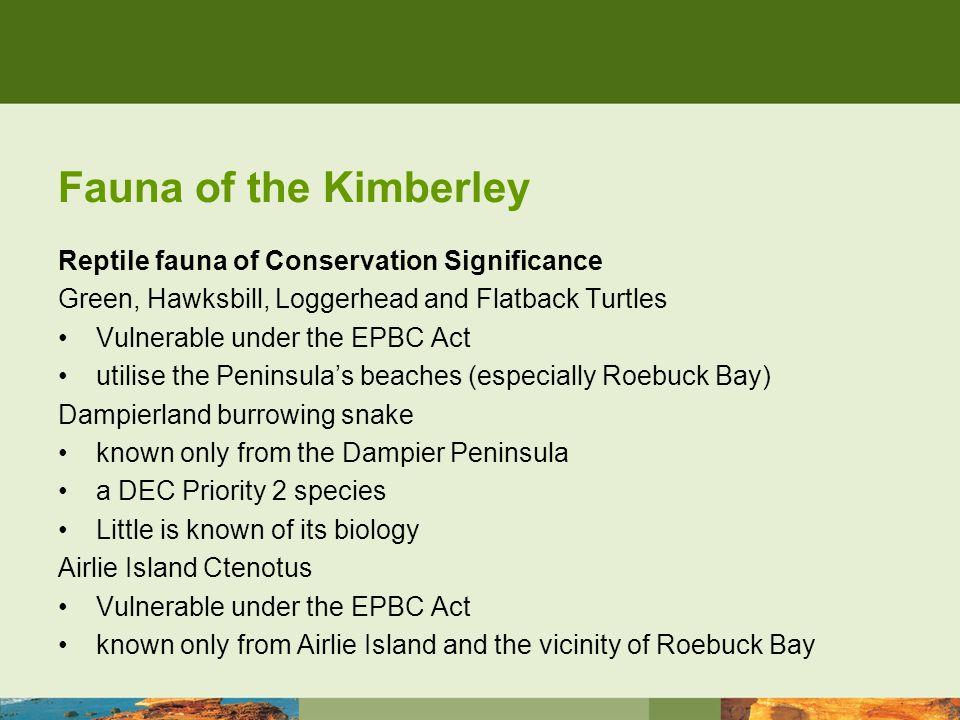 Fauna of the Kimberley Birds Birds Birds.and lots of them.
