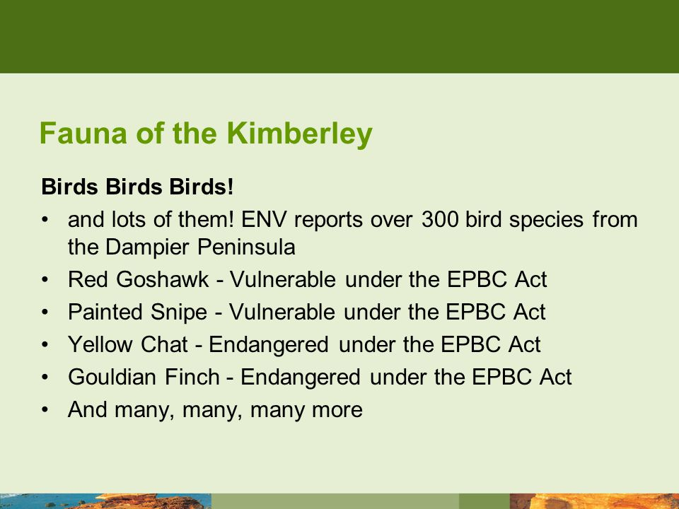 Fauna of the Kimberley Birds Birds Birds. and lots of them.