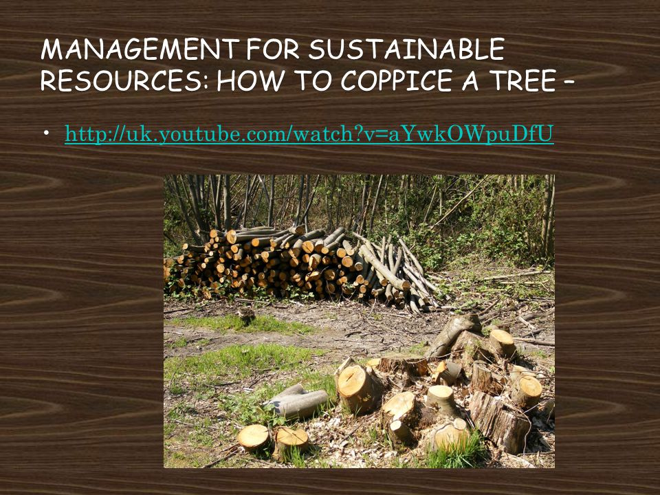 MANAGEMENT FOR SUSTAINABLE RESOURCES: HOW TO COPPICE A TREE – http://uk.youtube.com/watch?v=aYwkOWpuDfU