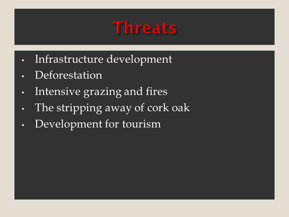 Infrastructure development Deforestation Intensive grazing and fires The stripping away of cork oak Development for tourism
