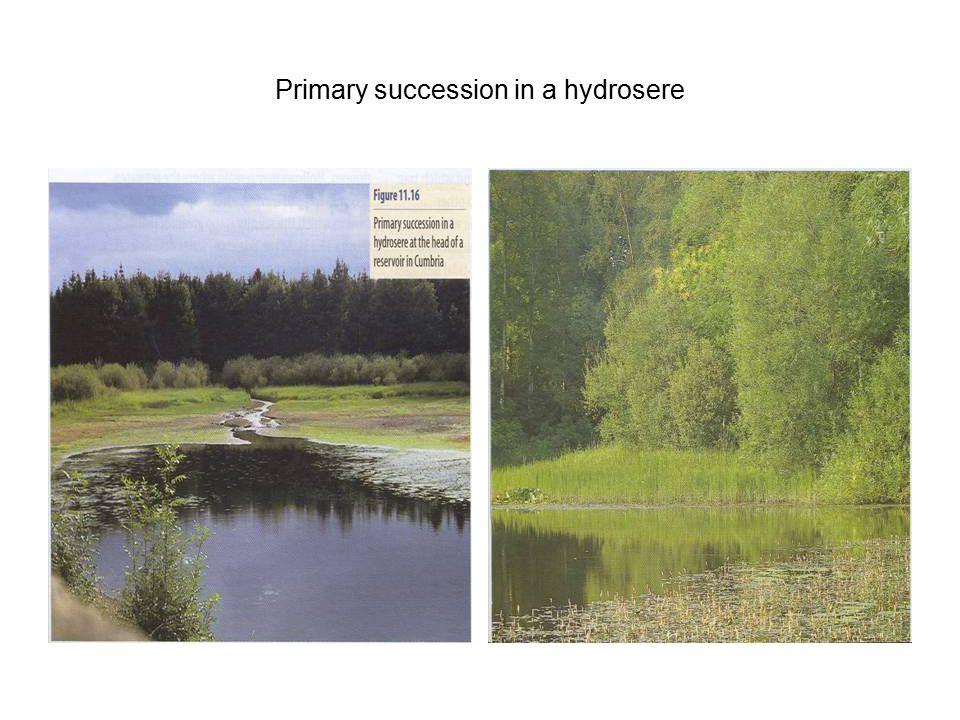 Primary succession in a hydrosere