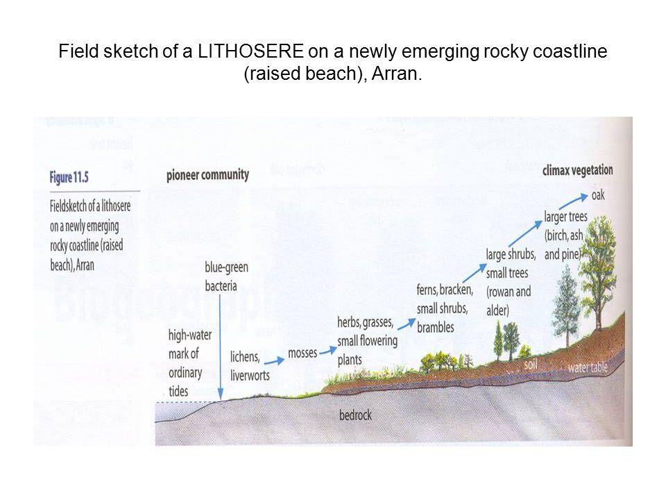 Field sketch of a LITHOSERE on a newly emerging rocky coastline (raised beach), Arran.