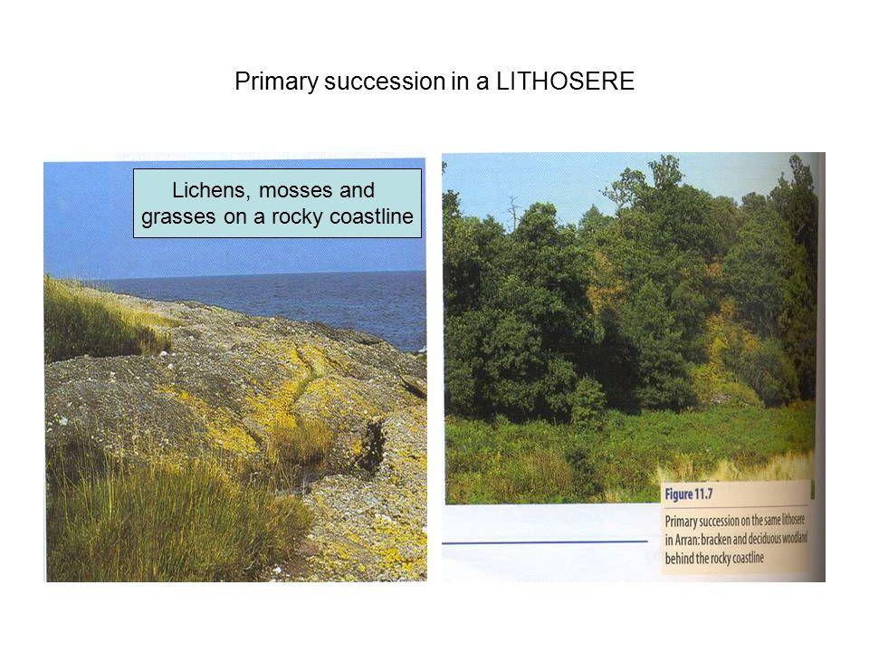 Primary succession in a LITHOSERE Lichens, mosses and grasses on a rocky coastline