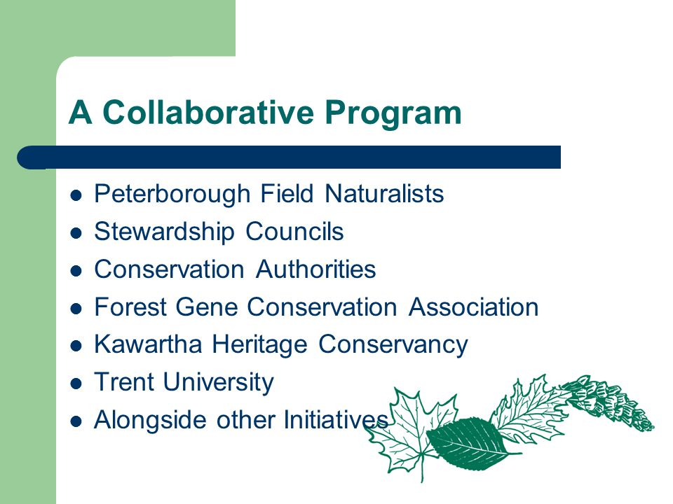 A Collaborative Program Peterborough Field Naturalists Stewardship Councils Conservation Authorities Forest Gene Conservation Association Kawartha Heritage Conservancy Trent University Alongside other Initiatives