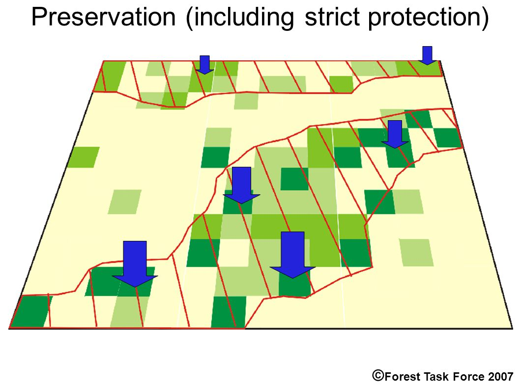 Preservation (including strict protection) © Forest Task Force 2007