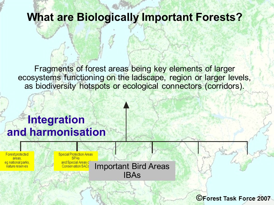 Special Protection Areas SPAs and Special Areas of Conservation SACs What are Biologically Important Forests.