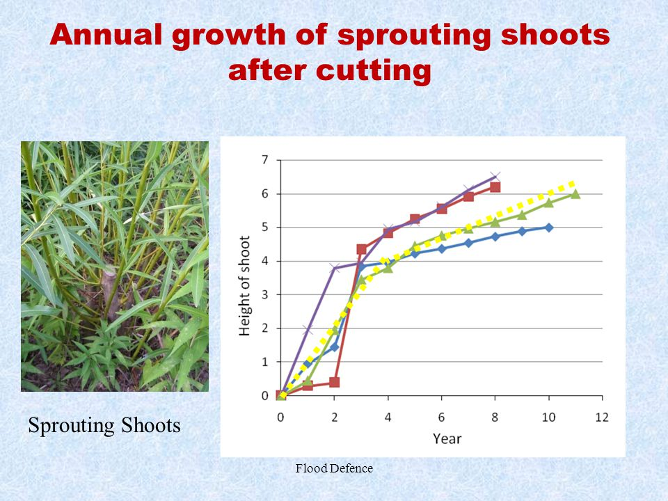 Annual growth of sprouting shoots after cutting Flood Defence Sprouting Shoots