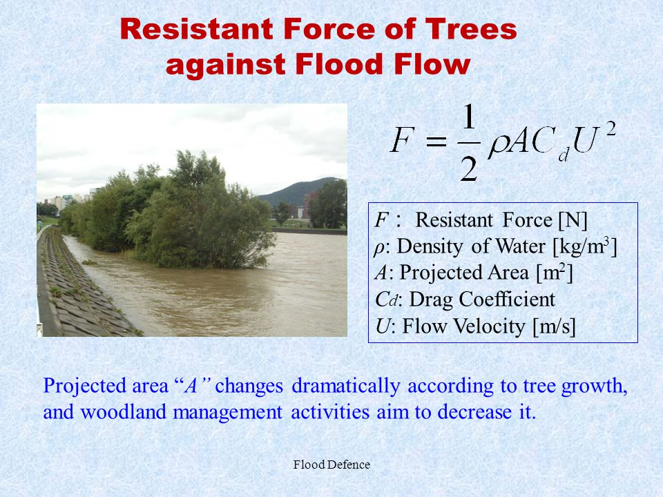 Resistant Force of Trees against Flood Flow Flood Defence F : Resistant Force [N] ρ: Density of Water [kg/m 3 ] A: Projected Area [m 2 ] C d : Drag Co