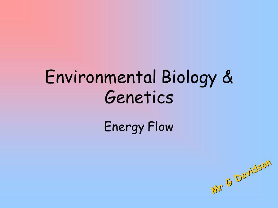Environmental Biology & Genetics Energy Flow M r G D a v i d s o n