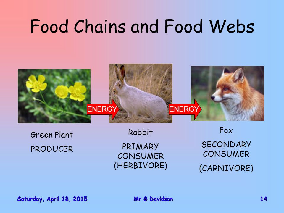 Food Chains and Food Webs Saturday, April 18, 2015Saturday, April 18, 2015Saturday, April 18, 2015Saturday, April 18, 201514Mr G Davidson Green Plant