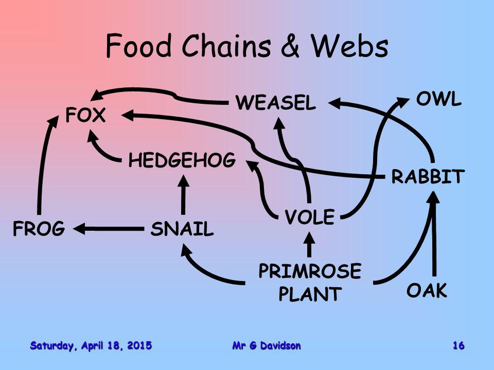 Saturday, April 18, 2015Saturday, April 18, 2015Saturday, April 18, 2015Saturday, April 18, 201516Mr G Davidson Food Chains & Webs FOX SNAIL HEDGEHOG