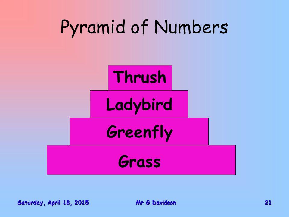 Saturday, April 18, 2015Saturday, April 18, 2015Saturday, April 18, 2015Saturday, April 18, 201521Mr G Davidson Pyramid of Numbers Grass Greenfly Ladybird Thrush