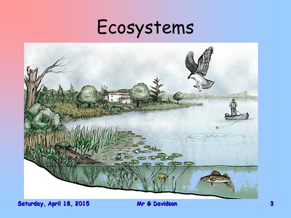 Food Chains and Food Webs Saturday, April 18, 2015Saturday, April 18, 2015Saturday, April 18, 2015Saturday, April 18, 201514Mr G Davidson Green Plant PRODUCER Rabbit PRIMARY CONSUMER (HERBIVORE) Fox SECONDARY CONSUMER (CARNIVORE) ENERGY