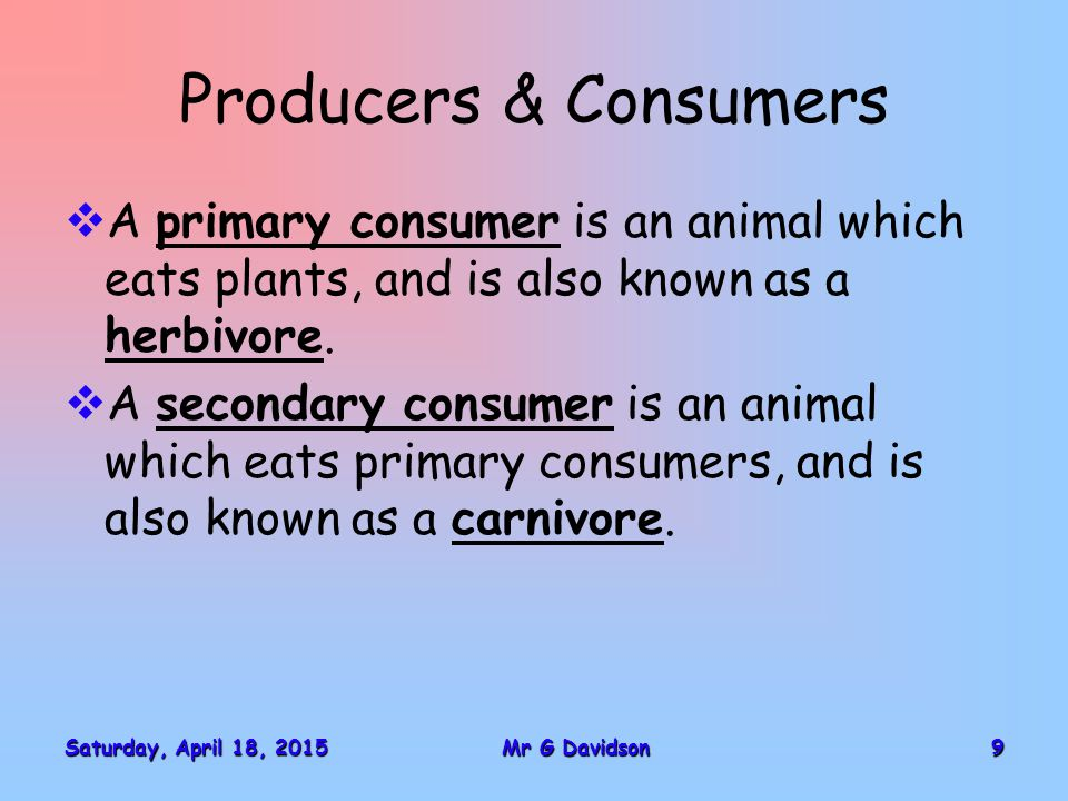 Saturday, April 18, 2015Saturday, April 18, 2015Saturday, April 18, 2015Saturday, April 18, 201510Mr G Davidson Producers & Consumers  An omnivore can eat both plants and animals.