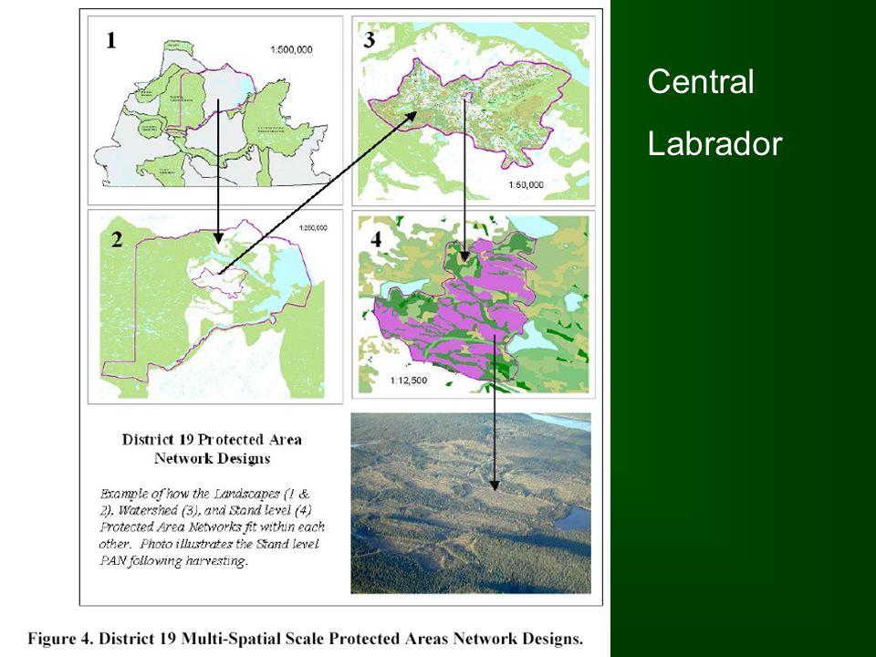 Central Labrador