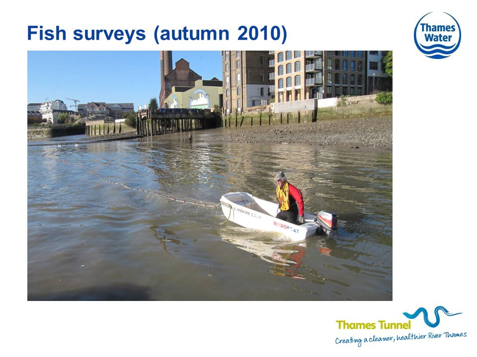 Fish surveys (autumn 2010)