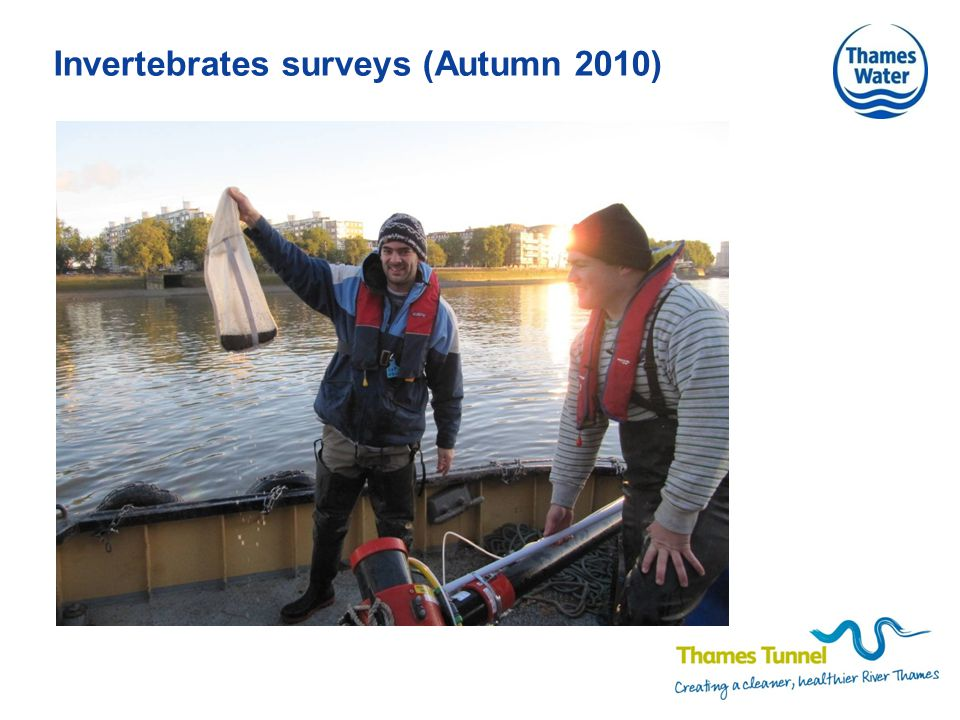 Invertebrates surveys (Autumn 2010)