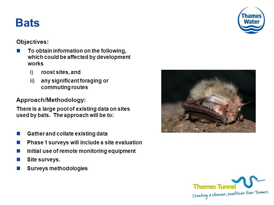 Bats Objectives: To obtain information on the following, which could be affected by development works i)roost sites, and ii)any significant foraging or commuting routes Gather and collate existing data Phase 1 surveys will include a site evaluation Initial use of remote monitoring equipment Site surveys.