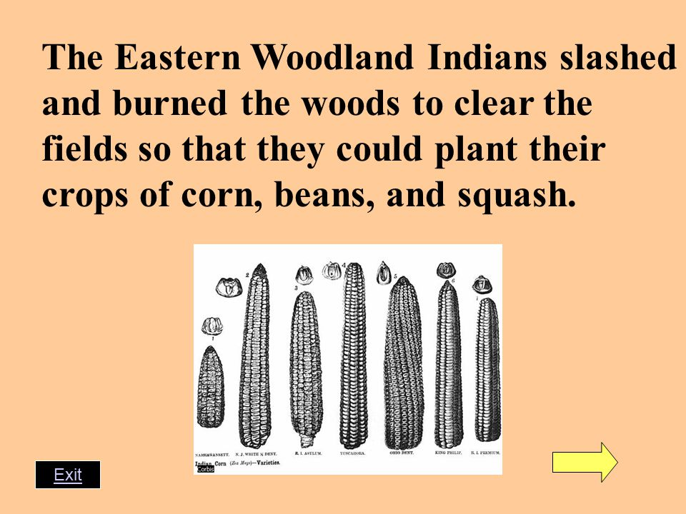 The Eastern Woodland Indians slashed and burned the woods to clear the fields so that they could plant their crops of corn, beans, and squash.