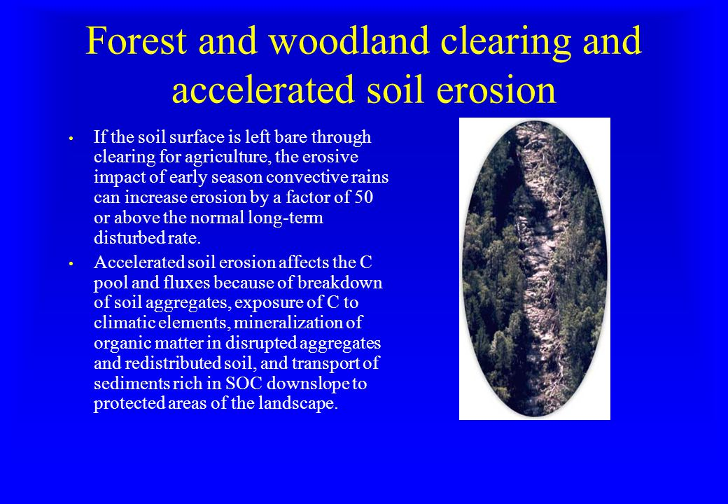 Forest and woodland clearing and accelerated soil erosion If the soil surface is left bare through clearing for agriculture, the erosive impact of early season convective rains can increase erosion by a factor of 50 or above the normal long-term disturbed rate.