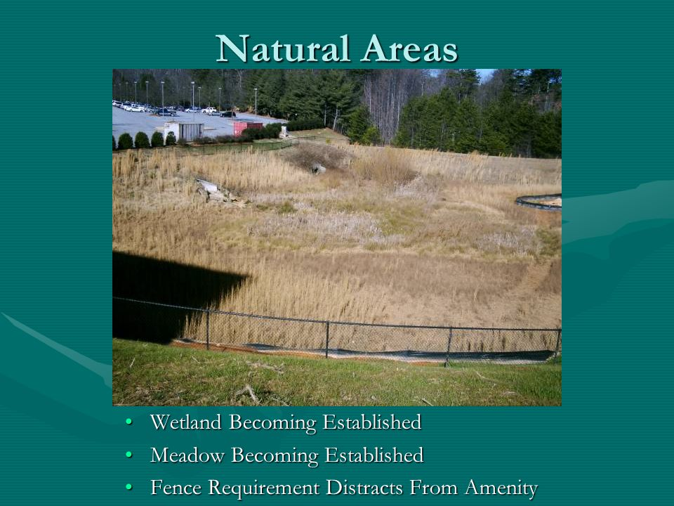 Natural Areas Wetland Becoming Established Meadow Becoming Established Fence Requirement Distracts From Amenity