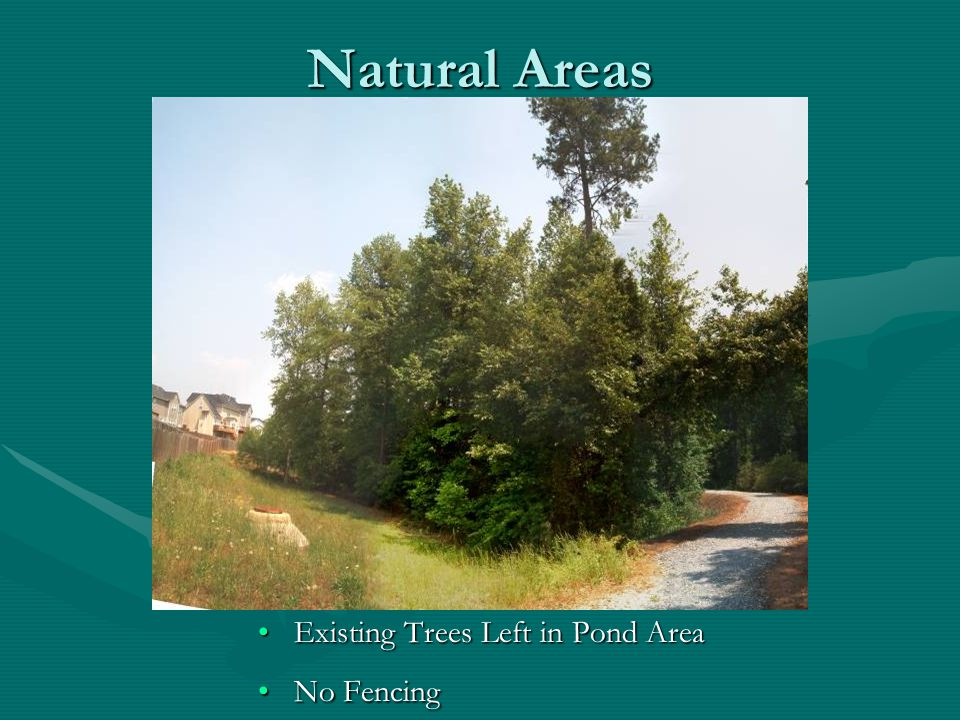 Natural Areas Existing Trees Left in Pond Area No Fencing