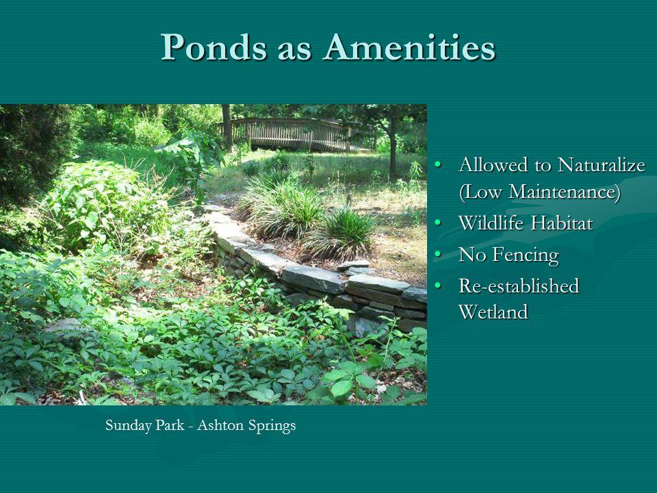 Ponds as Amenities Allowed to Naturalize (Low Maintenance) Wildlife Habitat No Fencing Re-established Wetland Sunday Park - Ashton Springs