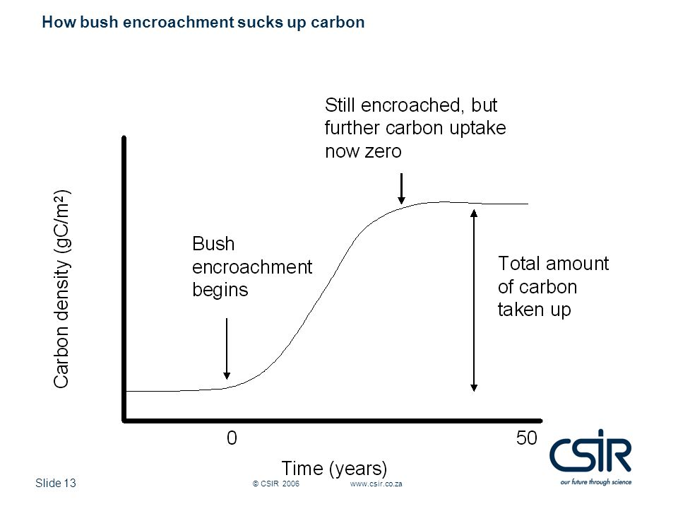 Slide 13 © CSIR 2006 www.csir.co.za How bush encroachment sucks up carbon