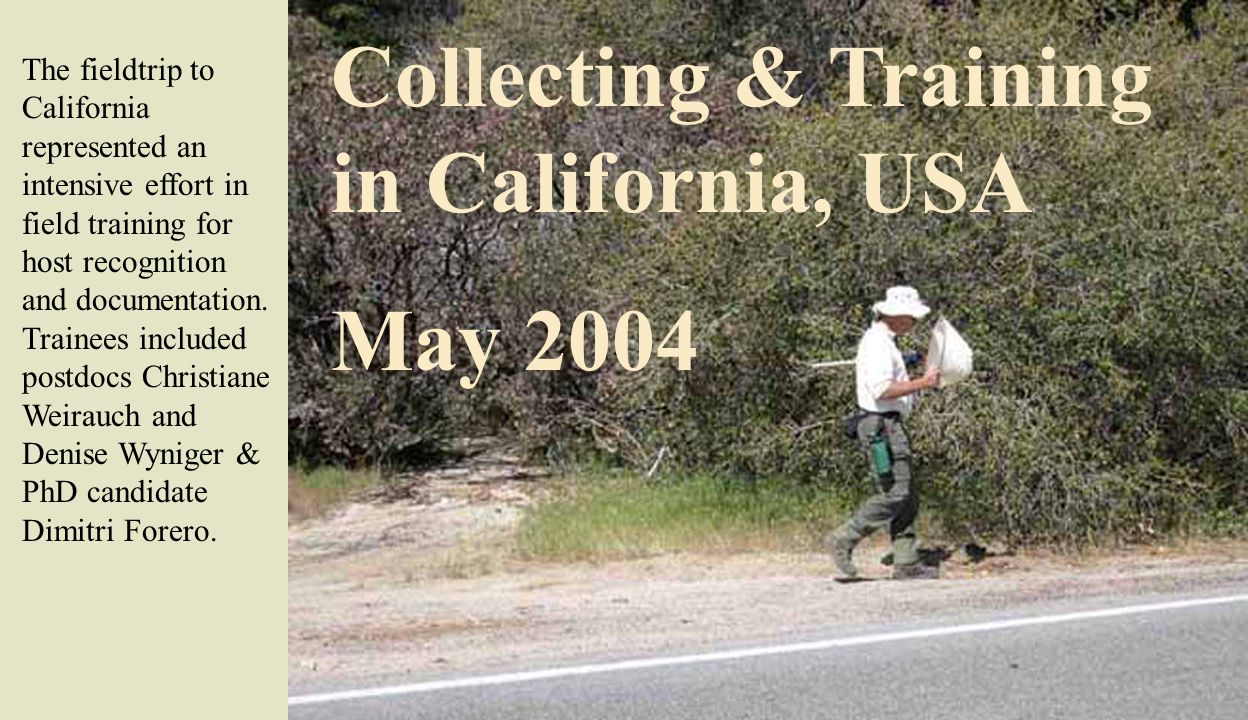 Collecting & Training in California, USA May 2004 The fieldtrip to California represented an intensive effort in field training for host recognition and documentation.