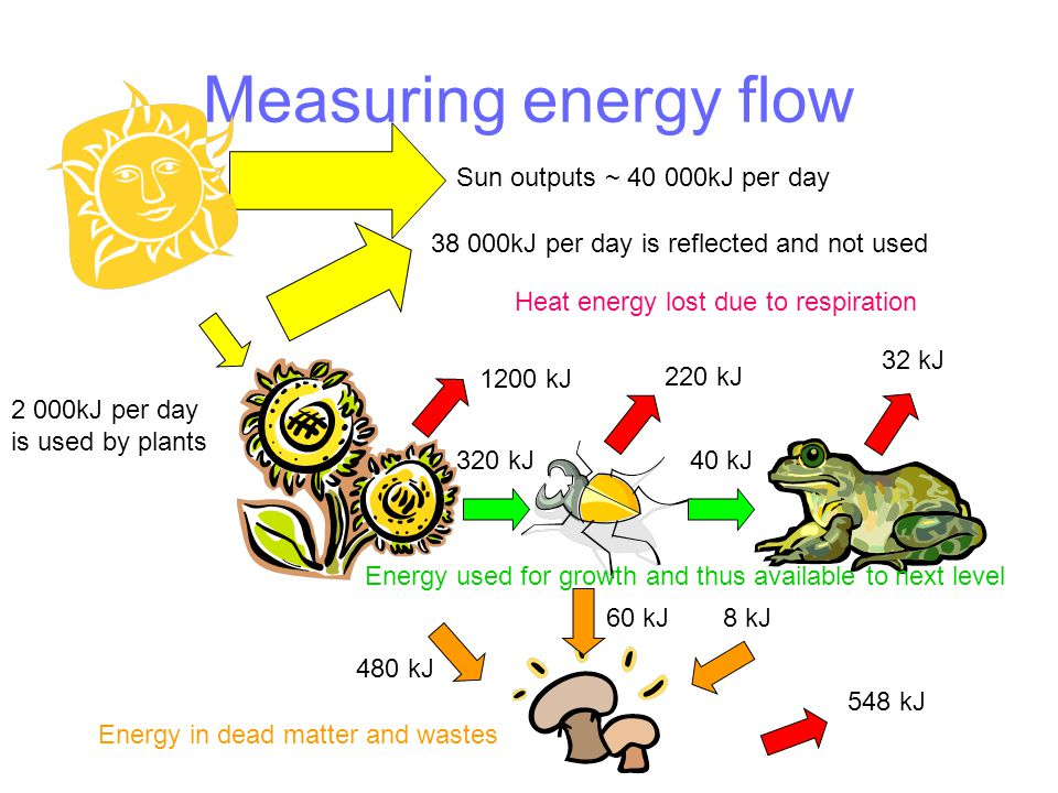 Measuring energy flow Sun outputs ~ 40 000kJ per day 38 000kJ per day is reflected and not used 2 000kJ per day is used by plants Heat energy lost due to respiration 1200 kJ 220 kJ 32 kJ Energy used for growth and thus available to next level 320 kJ40 kJ 480 kJ 60 kJ8 kJ 548 kJ Energy in dead matter and wastes