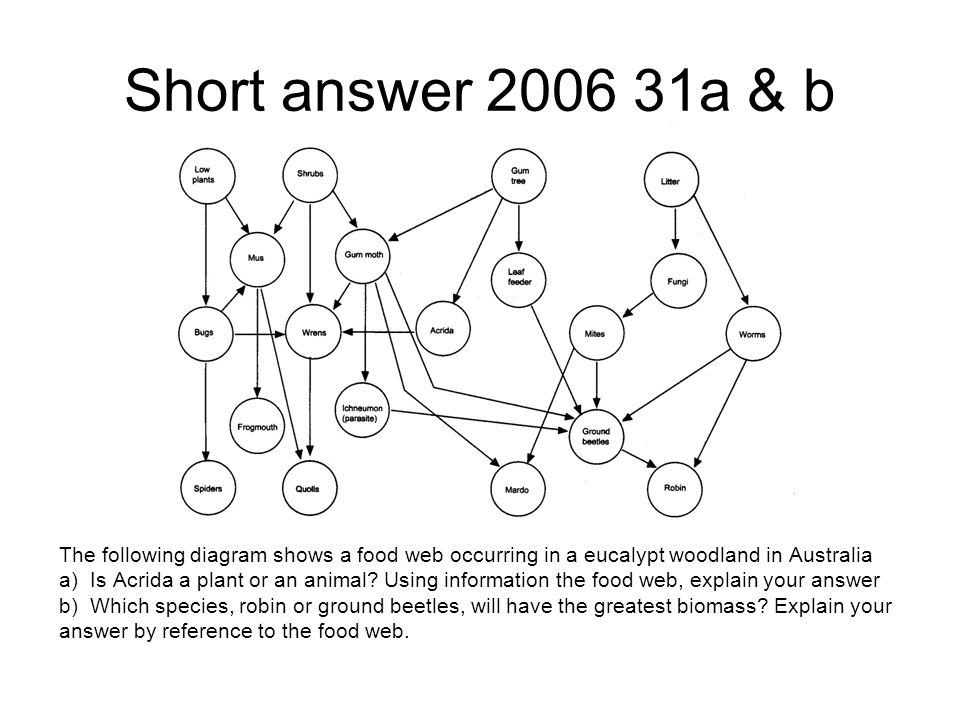 Short answer 2006 31a & b The following diagram shows a food web occurring in a eucalypt woodland in Australia a) Is Acrida a plant or an animal.
