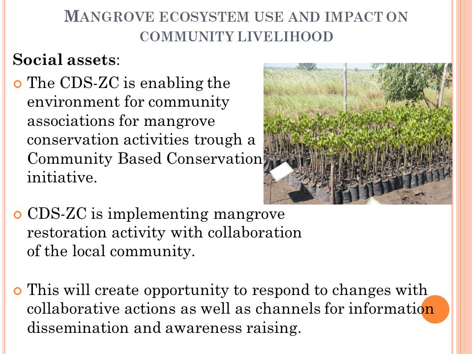 M ANGROVE ECOSYSTEM USE AND IMPACT ON COMMUNITY LIVELIHOOD Social assets : The CDS-ZC is enabling the environment for community associations for mangrove conservation activities trough a Community Based Conservation initiative.