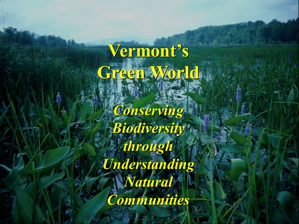 Wetland Natural Communities Forested Wetlands Floodplain Forests (4) Hardwood Swamps (6) Softwood Swamps (4) Seeps and Vernal Pools (2) Open or Shrub Wetlands Open Peatlands (7) Marshes and Sedge Meadows (6) Wet Shores (7) Shrub Swamps (4)