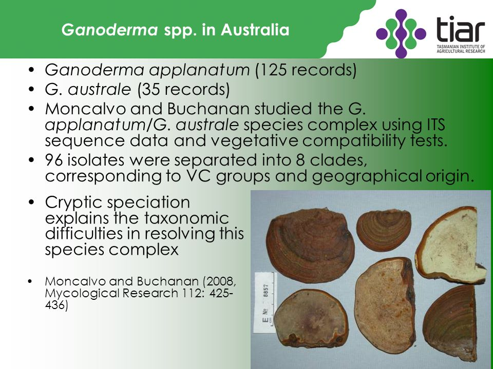 Ganoderma spp.in Australia Ganoderma applanatum (125 records) G.