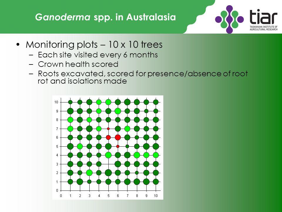 Ganoderma spp.