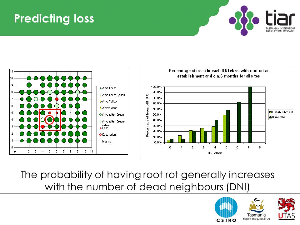 Predicting loss The probability of having root rot generally increases with the number of dead neighbours (DNI)