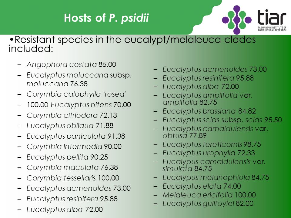 Hosts of P. psidii –Angophora costata 85.00 –Eucalyptus moluccana subsp.