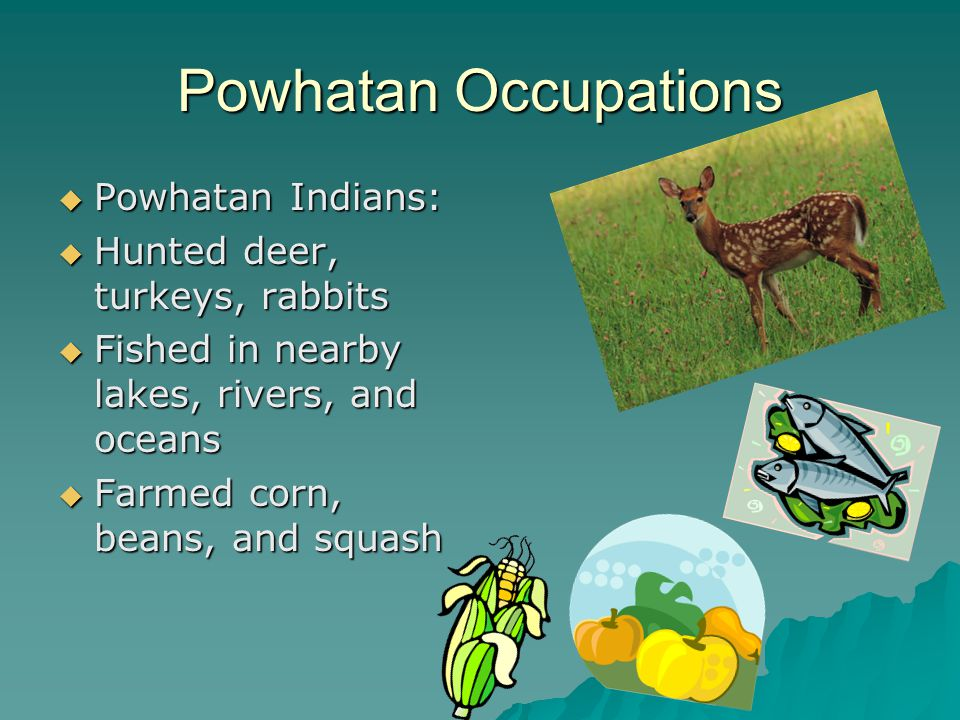 Powhatan Transportation Powhatan Indians walked and used canoes to get from place to place Powhatan Indians walked and used canoes to get from place t